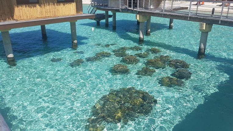 La préservation du lagon de Bora Bora, l'affaire de tous