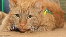 Nouvelle-Zélande: un chien donne son sang à un chat pour le sauver
