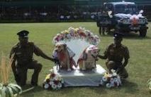 Sri Lanka: les noces de chiens policiers suscitent la fureur du ministre