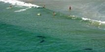La Réunion, île aux requins malgré elle