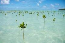 Les états insulaires du Pacifique s'inquiètent de la montée des eaux