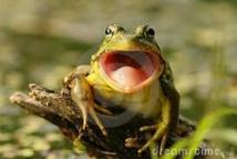 De petites grenouilles tropicales entendent... par la bouche