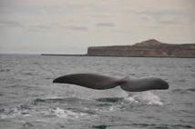 Les eaux territoriales de l'Uruguay, sanctuaire pour baleines et dauphins