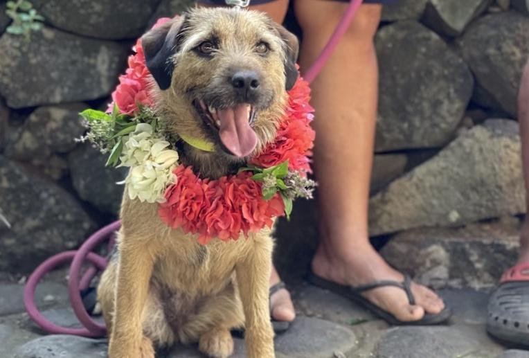 Tip à son arrivée sur l'île de Ua Huka. (© Association Vaiku'a)