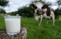 """Une """"Milk Valley"""" dans l'Ouest de la France pour être à la pointe sur le lait"""