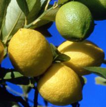 """""""Citron, le fruit du soleil"""" par Frédéric Précloux, chiropracteur à Papeete"""