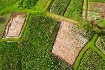 Tahiti Heritage: Découvrez les richesses de notre fenua
