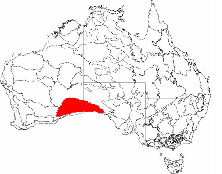 En rouge sur cette carte de l'Australie, la partie la plus désertique de Nullarbor qui faillit coûter la vie à Henri Gilbert.