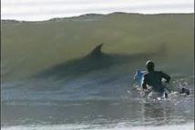 Risque requin à la Réunion: nouvel arrêté réglementant la baignade et les activités nautiques