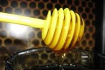 Miel: pas d'effet miracle pour prévenir l'infection chez des dialysés