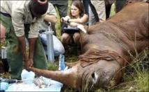 Contre le braconnage, le Kenya va implanter des puces électroniques sur les rhinocéros