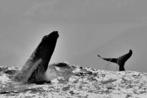 Une réunion cruciale en Australie pour instaurer des sanctuaires marins en Antarctique