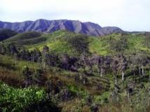 Abattage des forêts : une province salomonaise déclare la guerre aux abatteurs