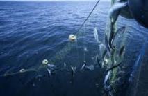 Hareng et maquereau : les Iles Féroé s'en prennent à l'UE auprès de l'OMC