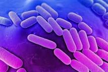 Premier cas de résistance absolue aux antibiotiques importé en Nouvelle-Zélande
