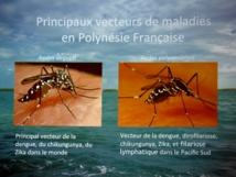 Dengue : le cap du millier de cas est franchi