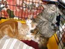 Sauvetage de 130 chiens et huit chats reclus dans une maison à Mexico