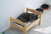 """Bientôt, un hôtel """"tout confort"""" pour chats à Paris"""
