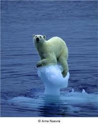 Une étude réévalue à la hausse la fonte de la banquise en Antarctique ouest