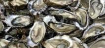 Monaco: des huîtres high tech affinées au pied du Rocher
