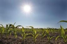 Au Brésil, 400 chercheurs préparent l'agriculture contre le changement climatique