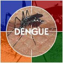 Alerte à la dengue à Fidji