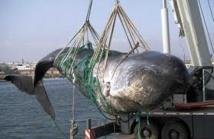 Pêche à la baleine: Washington redoute des incidents en Antarctique
