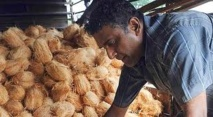 Vanuatu développe son « coco-fioul »