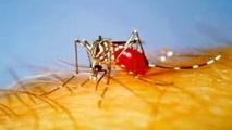 """Cas de Chikungunya dans les Antilles: """"risque élevé"""" de transmission aux Etats-Unis"""