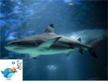 Twitter avec les requins pour mieux les éviter