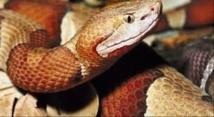 Tortues, lézards, serpents: attention danger pour les enfants