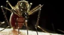 Chikungunya en Martinique: vigilance et inquiétude