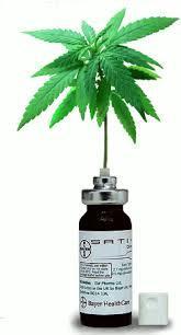 Premier feu vert en France pour le cannabis thérapeutique avec le Sativex