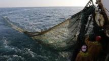 La lutte contre la pêche profonde gagne du terrain