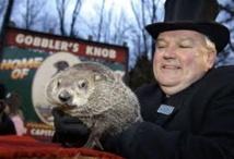 USA: l'hiver va durer, prédit Phil la marmotte