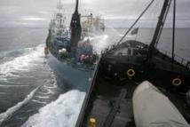 """Sea Shepherd: Tokyo demande à La Haye des """"actions concrètes"""" après une collision"""