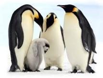 GB: des pingouins sous antidépresseurs pour cause de météo calamiteuse