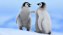 Deux bébés pingouins présentés au public dans un zoo de Hongrie