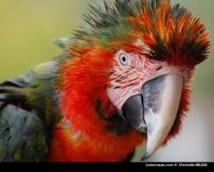 Quatre ans ferme pour des cambrioleurs trahis par un perroquet