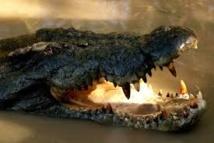 L'Australie renonce à son projet de safaris aux crocodiles