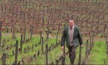 Une amende infligée à un viticulteur bio qui a refusé de traiter ses vignes