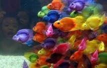 Les poissons perdent leur instinct de survie quand les océans s'acidifient