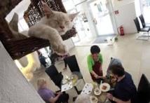 """Le premier """"bar à chats"""" américain ouvre pour quatre jours à New York"""