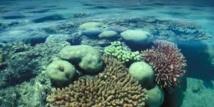 L'Unesco condamne le déversement de gravats près de la Grande barrière de corail