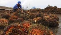Huile de palme: la sécheresse et El Niño risquent de faire flamber le prix du shampooing