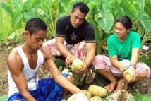 La cuisine samoane honorée sur la scène mondiale