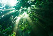 Forêts : la moitié des espèces mondiales menacées
