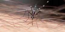 Pyrénées-Orientales: un cas de chikungunya importé des Antilles