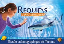 Musée océanographique de Monaco: des artistes chinois veulent réconcilier hommes et requins