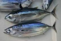 Les îles du Pacifique sud augmentent de 33% les droits de pêche au thon pour les flottes étrangères